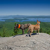 Beautiful day on Mount Major- I think Riley is enjoying her stay-she gives the view a one ear up... June 22, 2018.