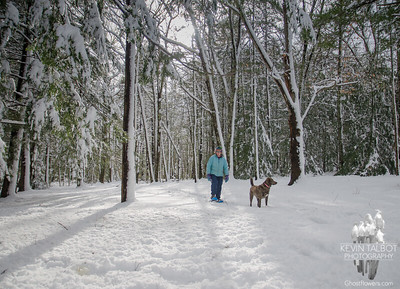 Momentary sunlight today as we snowshoed in the woods near home... March 9, 2018.