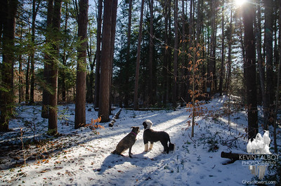 A walk in the woods Christmas Eve Day... December 24, 2019.