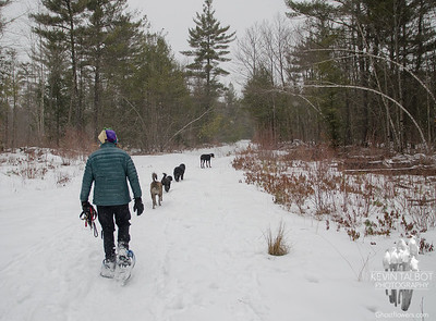 When you have all your dogs in a row- in a snowstorm... March 2, 2019.