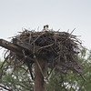 """Saturday at Thomas Point CG-""""I'm sitting in the rain, just sitting in the rain..."""" Mama Osprey weathered the storm through several inches of rain Friday night and most of Saturday... April 27, 2019."""
