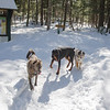 Last Hurrah for Tres Amigos today at Pudding Pond, Hank is home taking good care of his person once again... March 8, 2019.