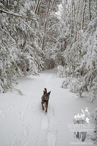 Stopping By A Snowy Wood... February 2, 2021.