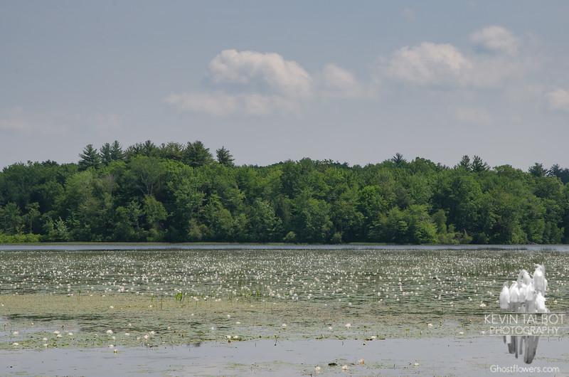 Monet Had His Lotus Pond, I Have Mine... June 21, 2021.