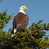 We Had Breakfast With Eagles This Morning... July 28, 2021.