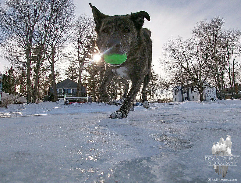 """Some Low Angle Action Today on the Powow- """"Always Keep One Paw on the Ice!""""- Wicket... February 13, 2021."""