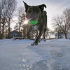 "Some Low Angle Action Today on the Powow- ""Always Keep One Paw on the Ice!""- Wicket... February 13, 2021."