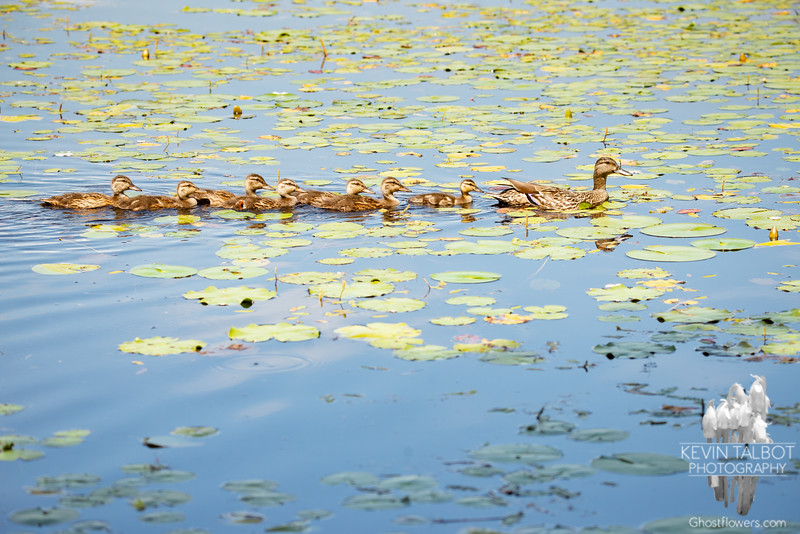 As a Matter of Fact, MY Ducks Are ALREADY in a Row... June 8, 2021.