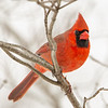If I Post Too Many Cardinals For You, Then We Probably Can't Be Friends... February 5, 2021.