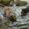 Hot July Day in a Cool Mountain Stream-Skinny-Dipping with Her Boyfriend Hank... July 5, 2020.