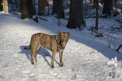 Valentine's Day Romp in the Woods with Favorite Pink Ball- Check! February 14, 2020.
