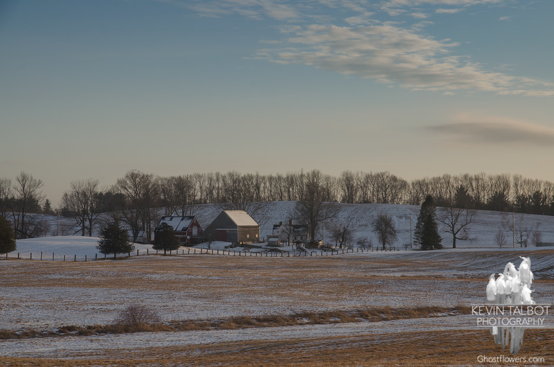 Late Afternoon at Woodsom Farm... January 24, 2020.