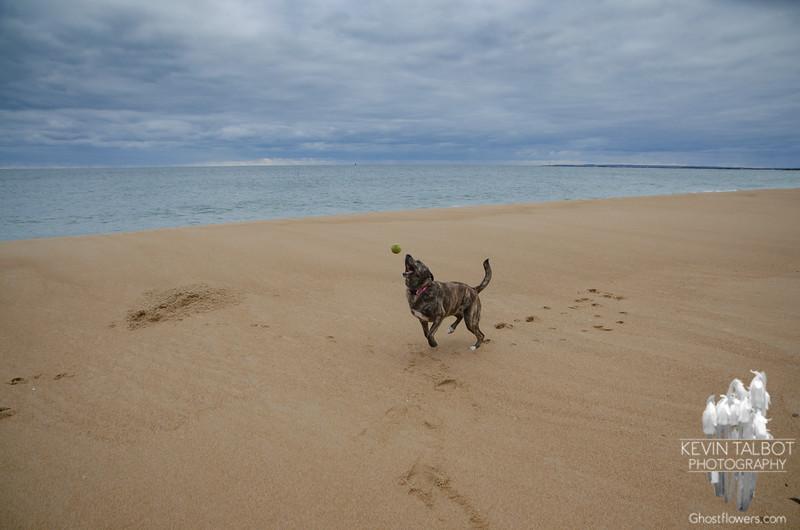 A dog, a ball, and an empty beach... January 28, 2020.