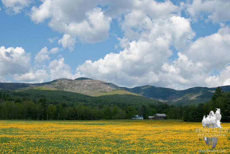 """I swear; In the days still left, we'll walk in fields of gold.""<br /> May 4, 2010."