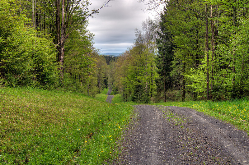 May 17 - A Drive in the Woods.  Morrow Road, Brookfield State Lands.