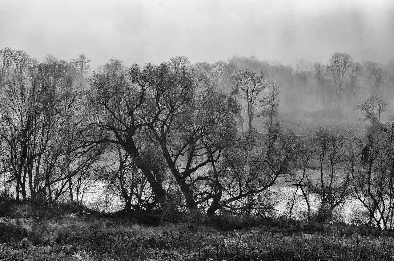 November 9 - Schoharie Creek in fog.