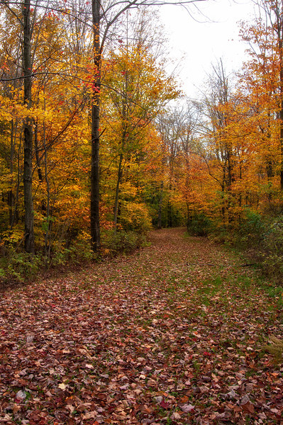 October 23 - Fall colors are going fast.  It's harder each day to find color.  Marry Perkins Road, Town of Columbus.