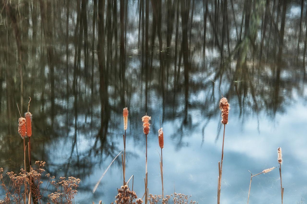 November 28 - Nearby pond.