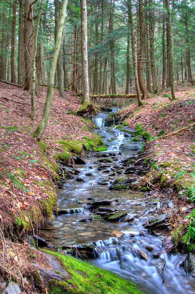 May 3 - Stream in the Brookfield State Lands