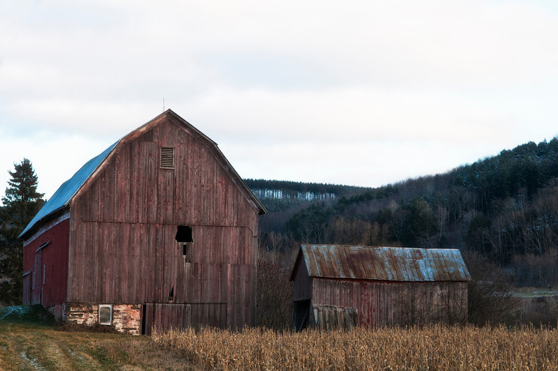 December 24 - There's snow at my place, but at lower elevations closer to town the ground is uncovered.  This barn is about a mile east of the Village of Sherburne, NY along NYS Route 80 East.
