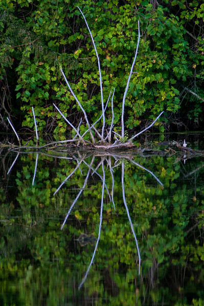 July 27 - Reflections at the Rogers Environmental Education Center.