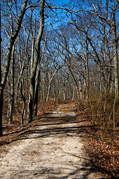 April 6 - A walk in the woods.  Shelter Island, NY.