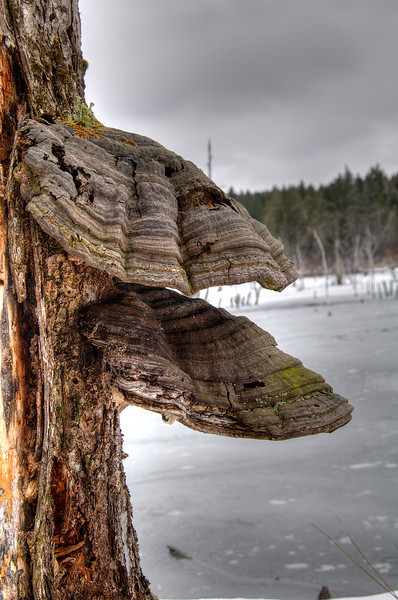 March 31 - On the shore of a beaver pond.