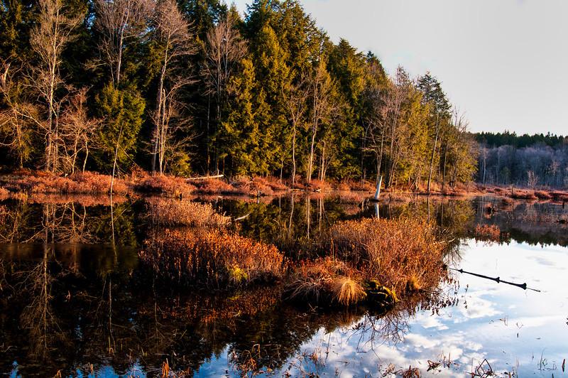 November 26 - Lost Pond, Brookfield