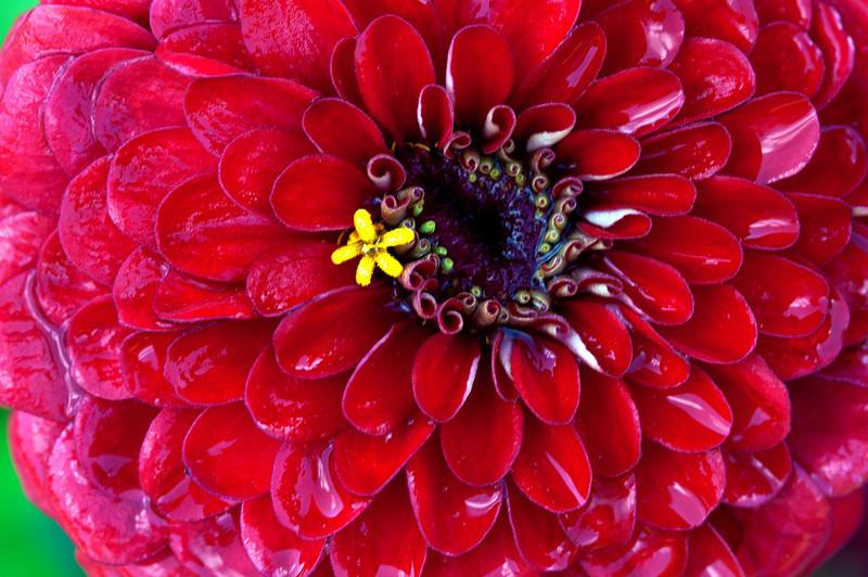 August 18 - A flower in a flower.