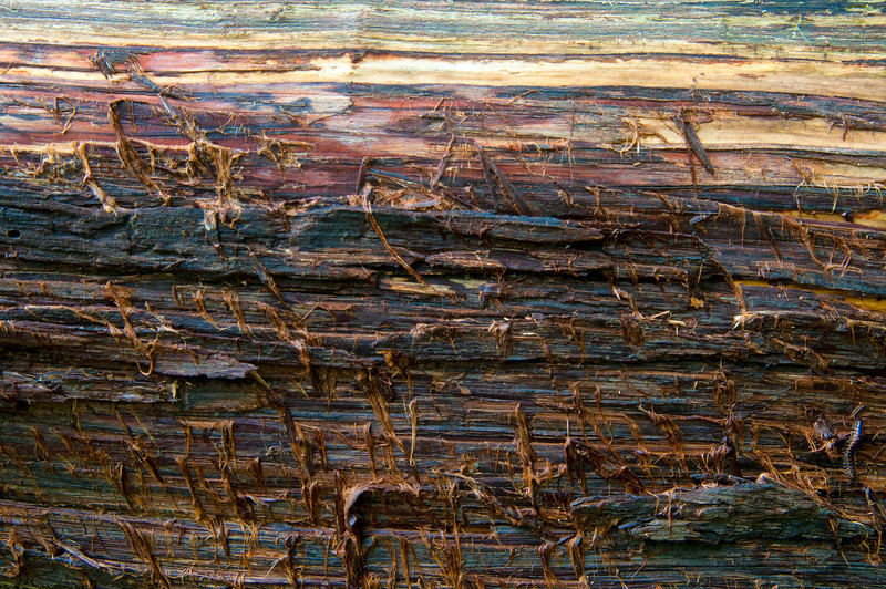 September 6 - Fallen log at Clark Reservation State Park.