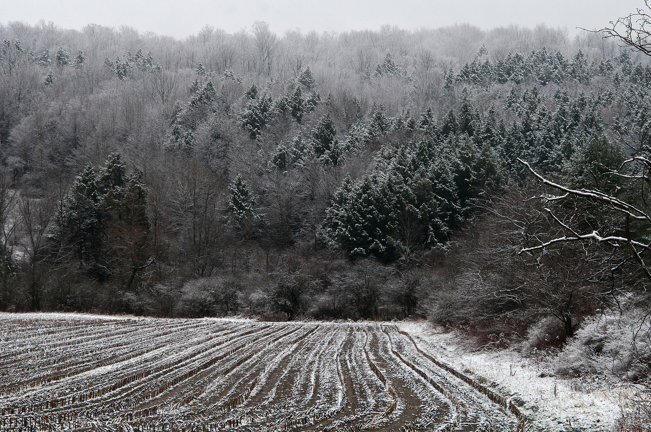 December 23 - A light dusting of snow brings plenty of photographic opportunities!  Cut corn field on Furman Mills Road, Sherburne, NY