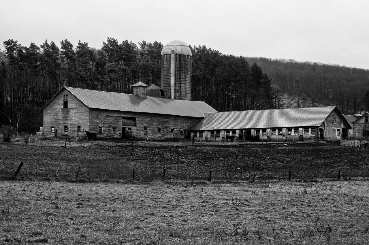 "December 21 - Barn in the Town of Hamilton.  This was the original ""Borden Farm."""