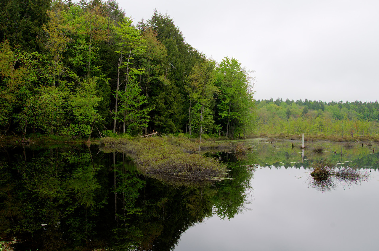 May 25 - Stillness of the morning.  So many recent days it's been breezy in the morning.  Not today.  Reflections - Lost Pond, Brookfield State Lands.