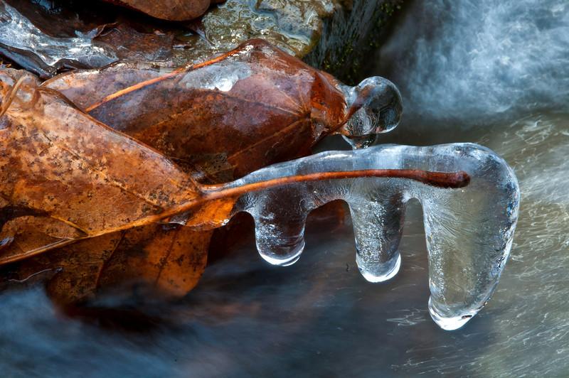 November 22 - Fall edging towards witner