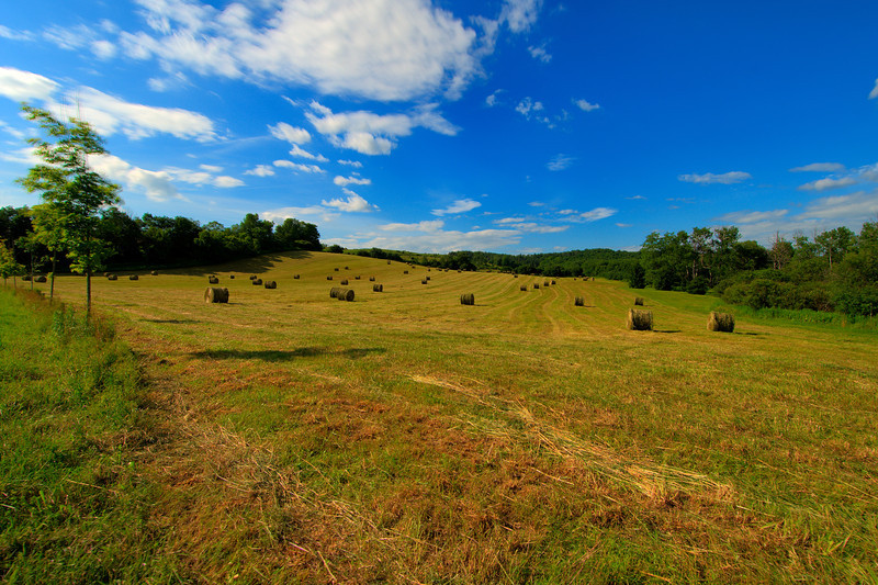 July 1 - Start of the second half of the year.  A field in Sherburne.