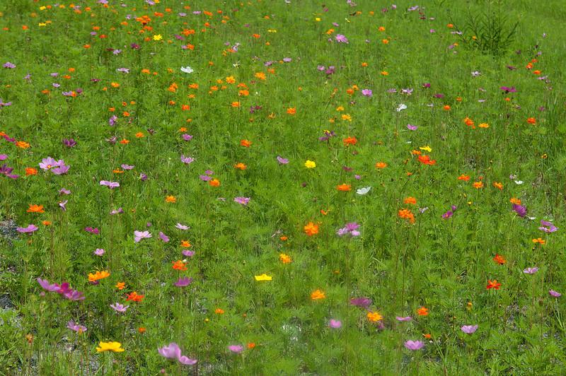 July 22 - West Virginia wildflowers.