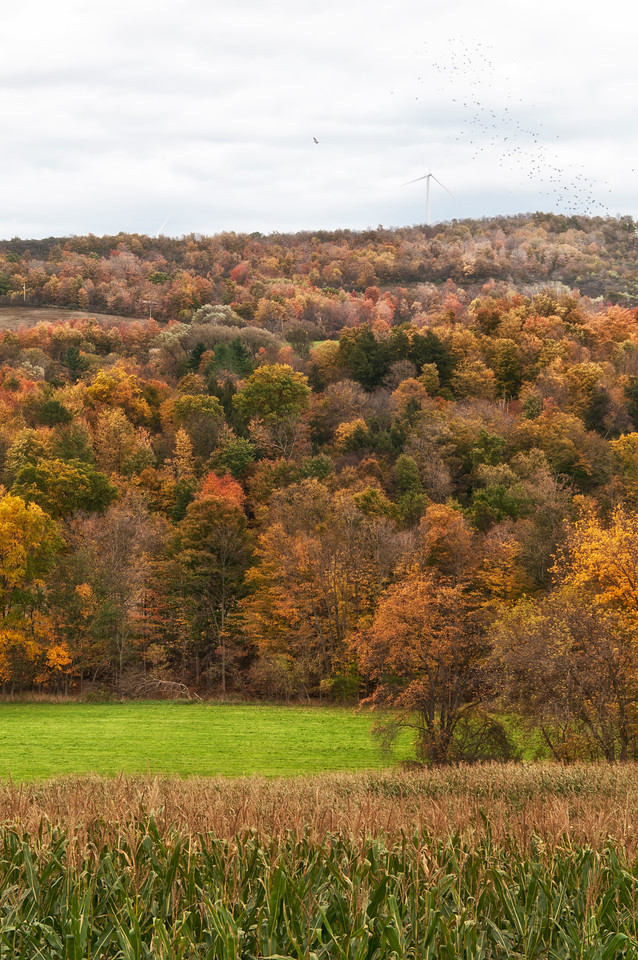 October 17 - Stockbridge Valley north of Hamilton, NY.