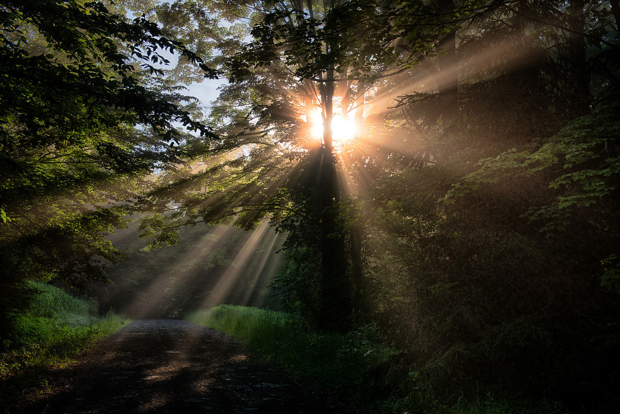 June 27 - The fog and sun in the Brookfield State Lands.