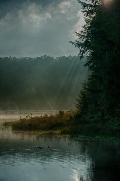 September 3 - Woodland Pond