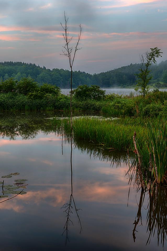 July 28 - Beaver Pond at Dawn