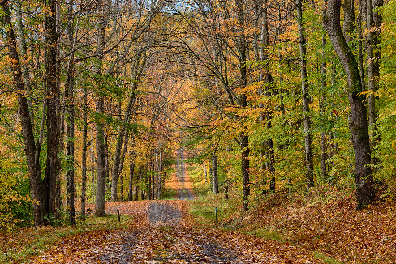 October 17 - Truck Trail 4 in the Charles E Baker State Forest