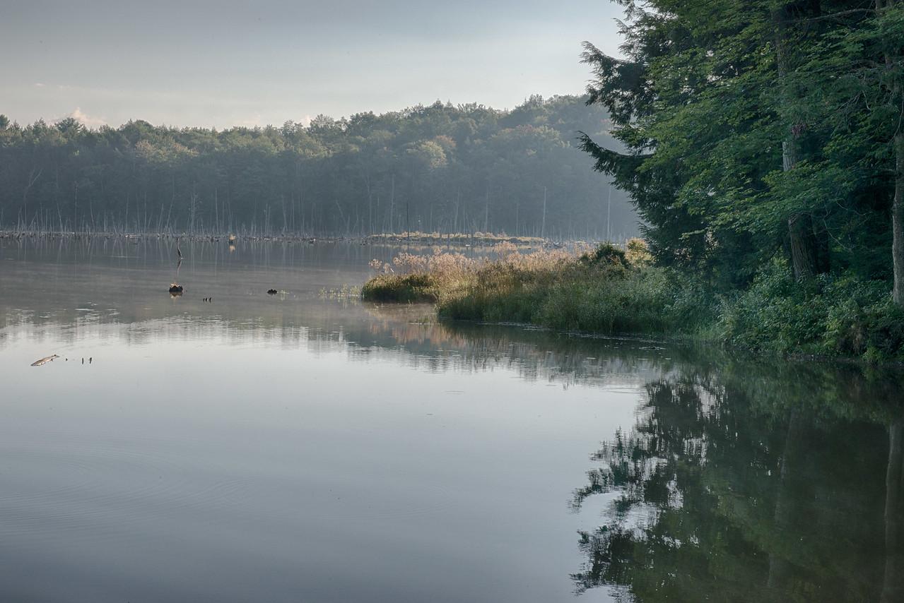 August 25 - Woodland Pond