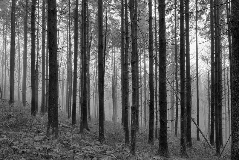 December 23 - Brookfield Woods