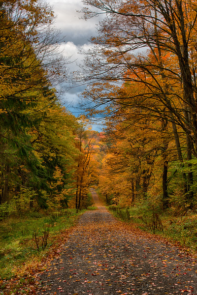 October 14 - Truck Trail 1 in the Charles E Baker State Forest