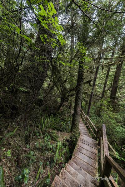 Rainforest Trail boardwalk
