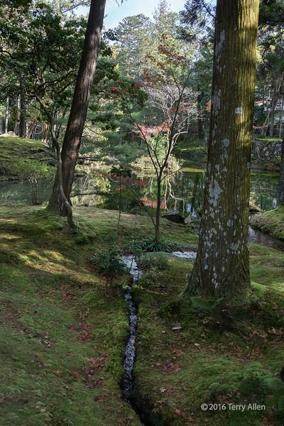 Fall at Saiho-ji