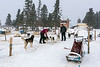 Ready for dog sledding?
