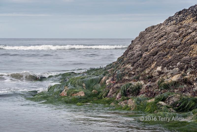 Off shore rocks at low tide