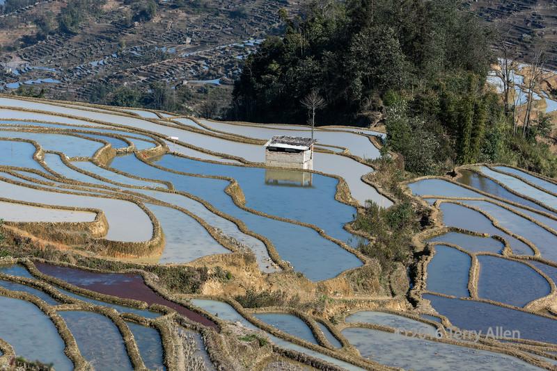 Yunnan rice terraces