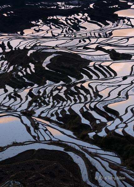 Rice terraces reflecting the sunrise